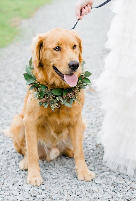 Golden Retriever with Greenery Wreath - Wedding Belles Blog